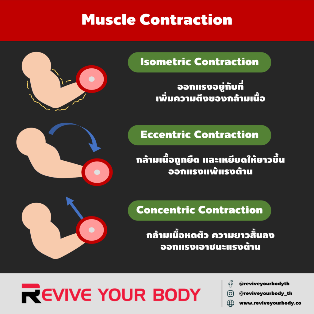 muscle contractions: isometric, eccentric, concentic
