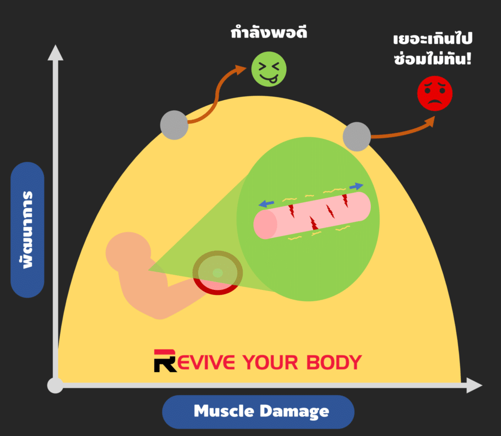 muscle damage and progression