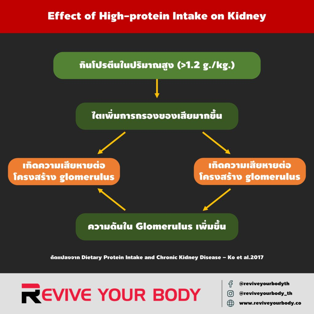 effect of high-protein intake on kidney